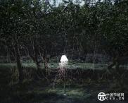 节能水果灯 自然给予的灯光能源