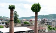 """下炉村原""""地方国营惠安糖厂""""两根红砖烟囱上长出茂盛的榕树"""